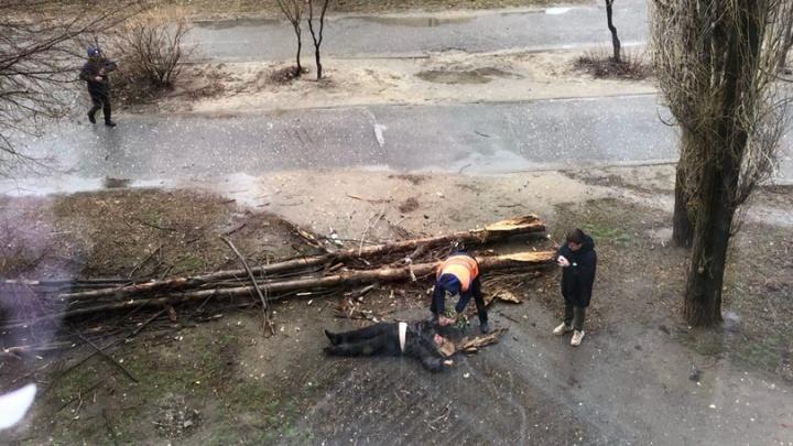 В Тракторозаводском районе Волгограда огромный тополь рухнул на женщину