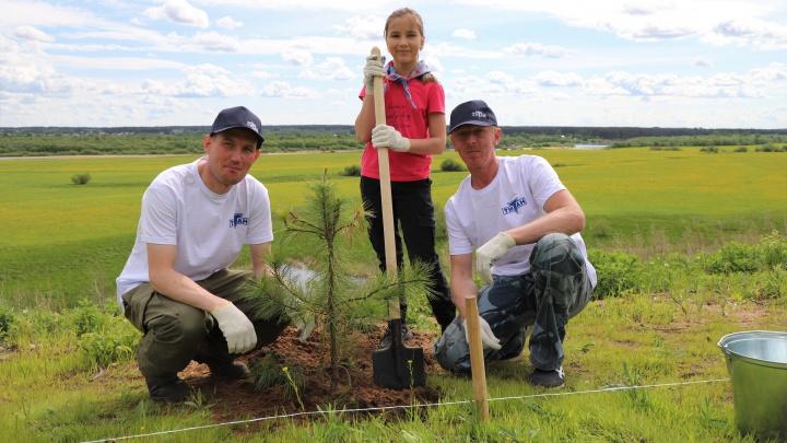 Посадили деревья и убрали мусор: в Вельске заложили Сад памяти