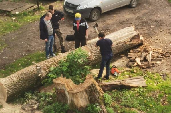 Рухнувшее дерево сняли с крыши сотрудники МЧС, но из двора его так никто и не вывез