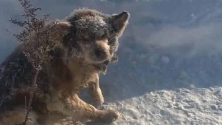 В Башкирии скончался пес Лаки, которого спасли от смерти в мороз