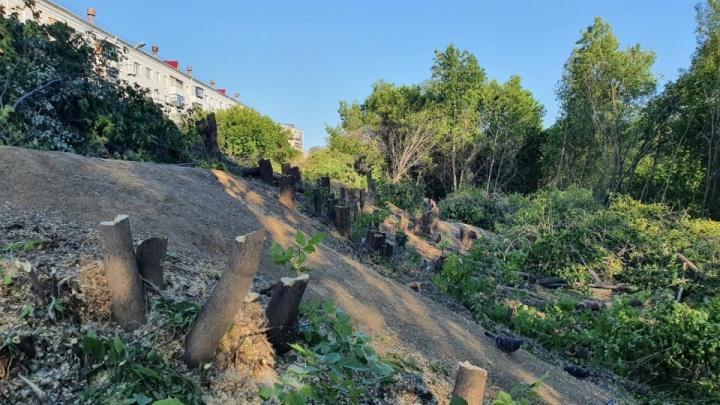 «Тема щепетильная»: глава Зауралья высказался о вырубках деревьев в Кургане