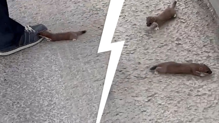 В Тюмени дикие животные вышли к людям