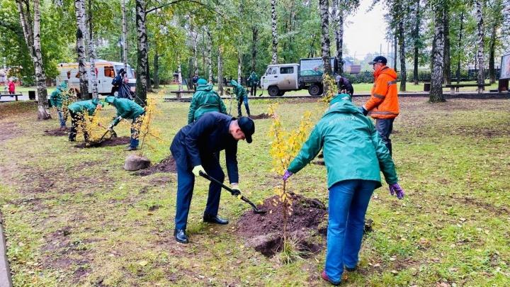 «Даешь кислород!»: пермский «Уралхим» высадил деревья в саду им. В. Л. Миндовского