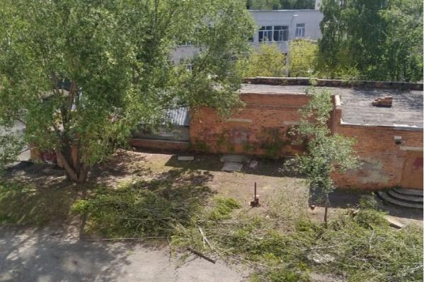 Вырубать деревья начали накануне