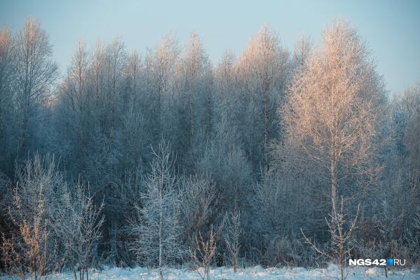 Сейчас лесопарковые зоны есть вокруг Кемерово, Новокузнецка и Белова