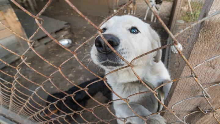 В Перми ловцов бродячих собак будут сопровождать полицейские и росгвардейцы