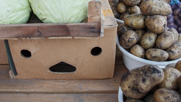 «Всю экономику развалили. Дорожает не только картошка»: волгоградцы — о космических ценах и «золотых» корнеплодах