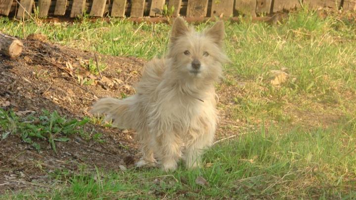 Заболела домашняя собака: под Самарой обнаружили новый очаг бешенства