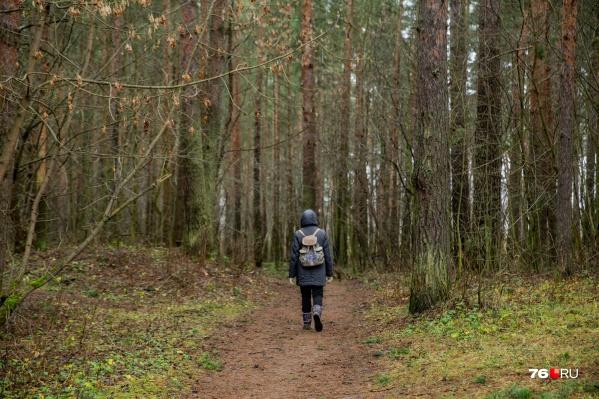 Ходить в лес во время особого противопожарного режима запрещено