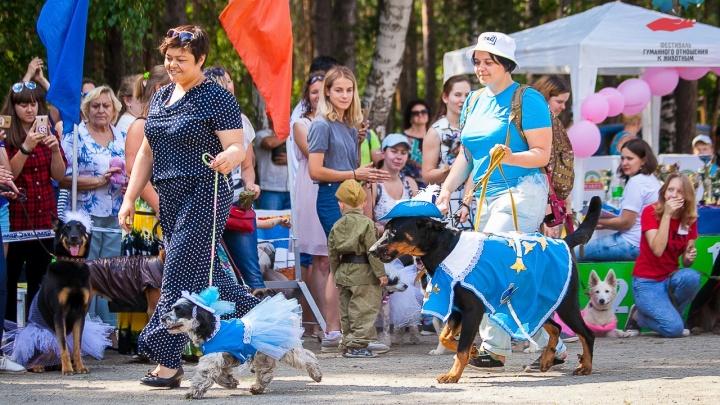 Собачий маскарад и выставка «Гав-шоу» пройдут на фестивале гуманного отношения к животным