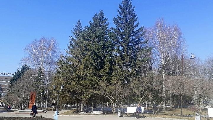 В Первомайском сквере начали рубить аварийные деревья— что там происходит сейчас