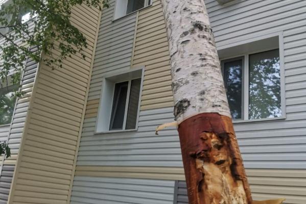 По словам очевидцев, повреждено более 50 деревьев