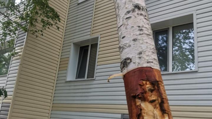 В Сургуте жители остановили вырубку деревьев. Полицию вызывали 4 раза