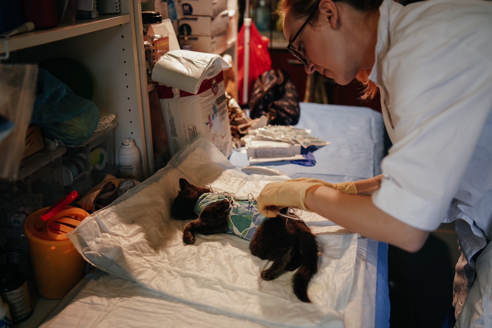 По проекту «Больницы» и с помощью гранта в этом году база планирует принять на лечение и реабилитацию не менее 500 животных