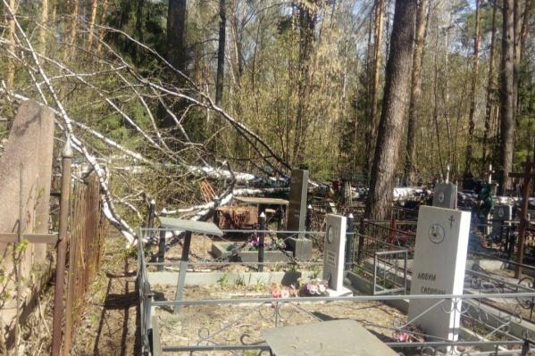 По словам очевидцев, дерево не было аварийным