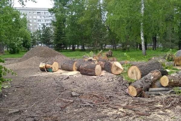 В Юдинском саду срубили несколько деревьев. Подрядчики говорят, что они были опасными и старыми