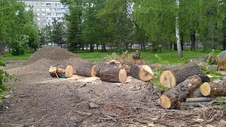 «Пятачок зелени превратили в лесоповал»: красноярец возмутился вырубкой деревьев на берегу Качи