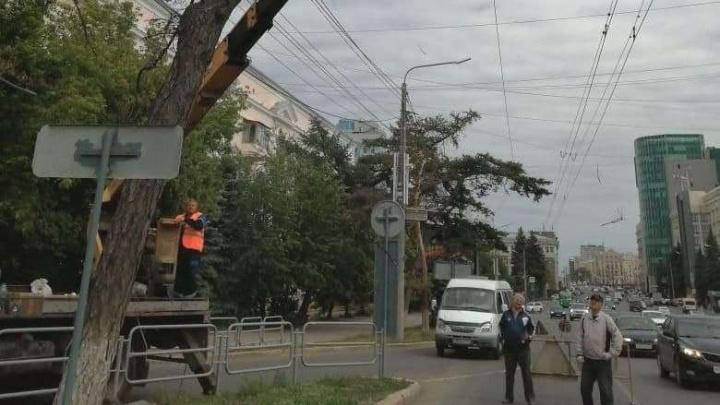 «Скандал будет, но нужно спилить»: названы имена тех, кто дал задание снести в Челябинске даурскую лиственницу