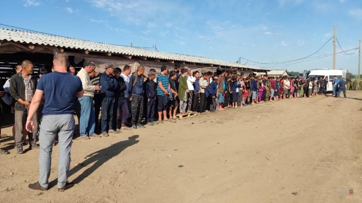 Под Волгоградом ФСБ, полиция и Росгвардия нашли нелегальных мигрантов на китайских тепличных плантациях