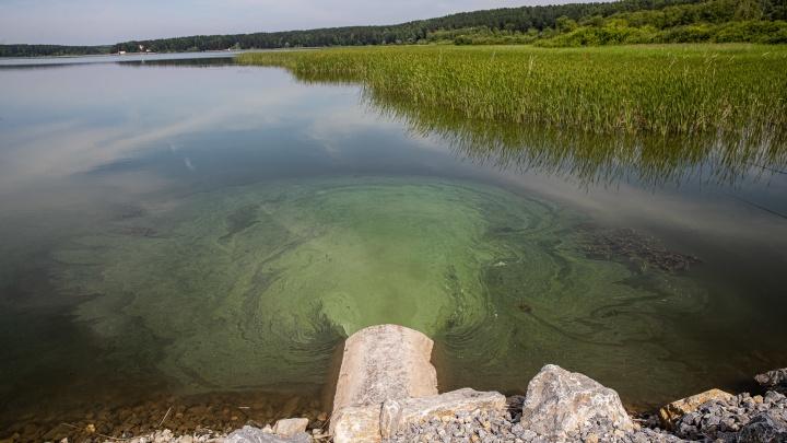 Росприроднадзор НСО назвал возможную причину появления водорослей в реке у элитных коттеджей