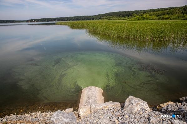 Вода с водорослями перетекает за дамбу