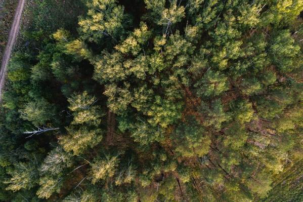 Горожане всё чаще рассматривают коттедж с участком и лесом в качестве альтернативы квартире