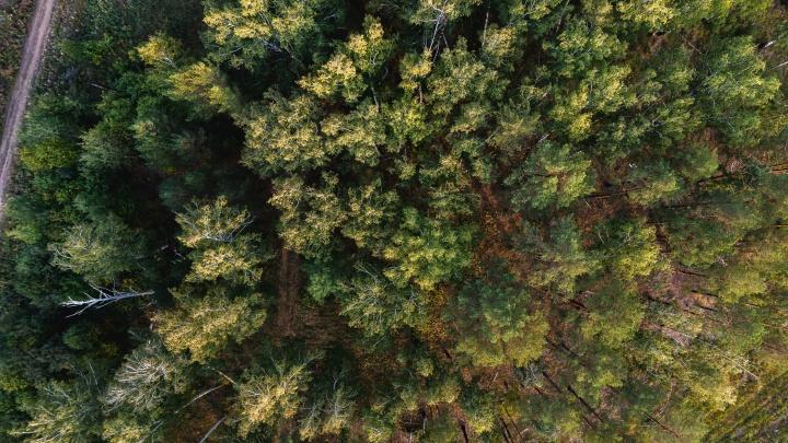 Земля с лесом и городской пропиской: в Екатеринбурге открылись продажи участков под дом или дачу