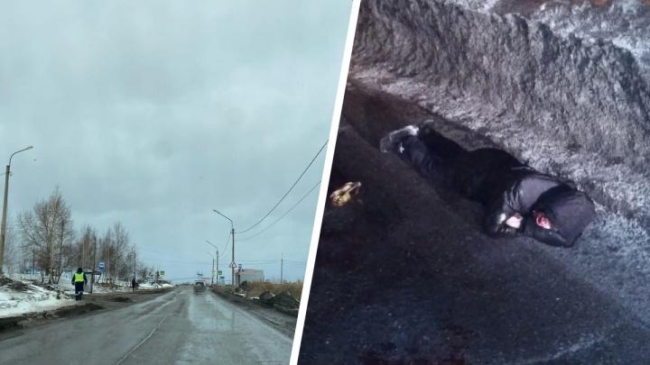 «Люди вынуждены ходить по дороге»: в Солнечном сбили пешехода, который не хотел шагать по сугробам