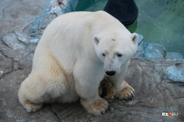 Умка жил в зоопарке с 24 апреля 1998 года