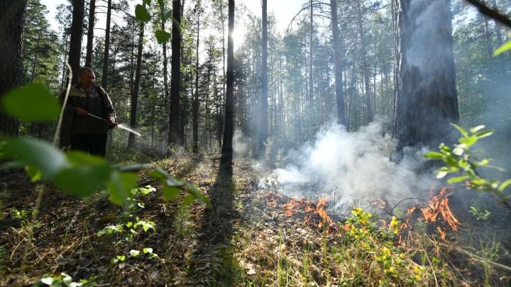 В Свердловской области введут тотальный запрет ходить в леса