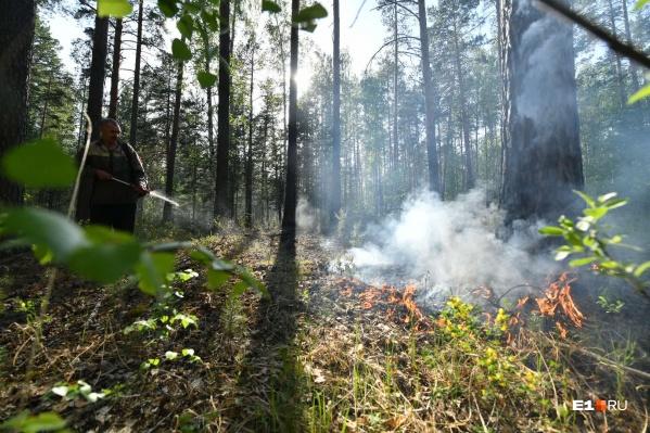 Пожар в Южном лесопарке полностью локализован