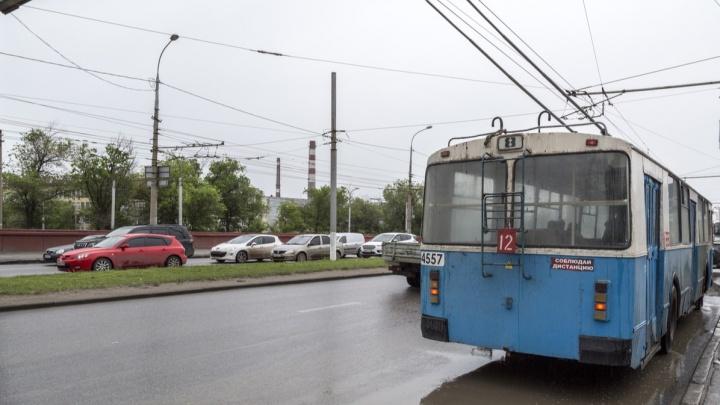 Можжевельник, ель и крымская сосна: в Волгограде облагораживают разделительный газон на проспекте Ленина