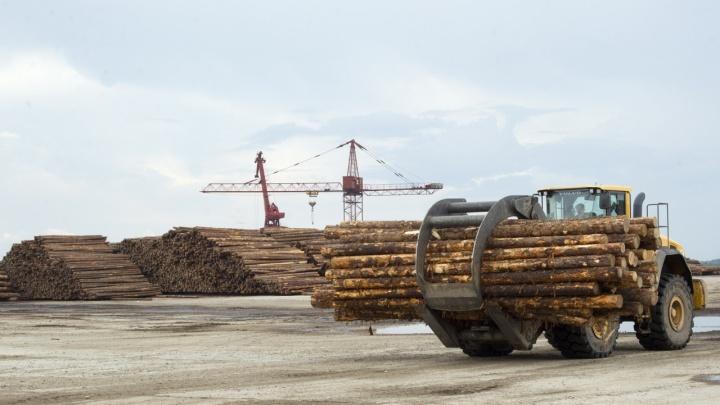 Китаец организовал нелегальную схему поставок леса к себе на родину