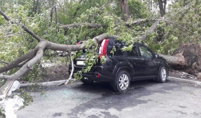В Екатеринбурге бизнесмен без суда вернул деньги за машину, раздавленную сразу двумя деревьями