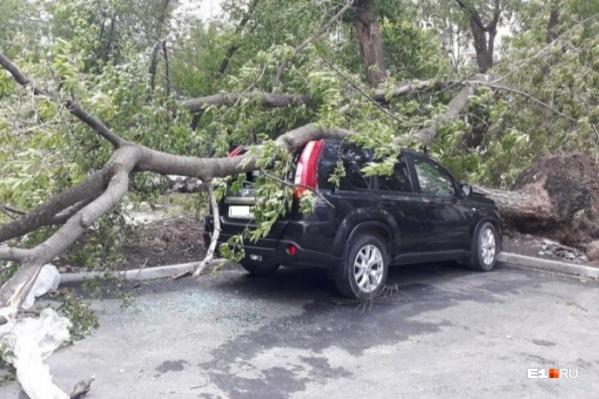 Припаркованный Nissan раздавили сразу два дерева