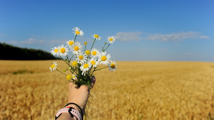 Знойное буйное лето: фотограф из Урюпинска показала романтику бескрайних степей Волгоградской области