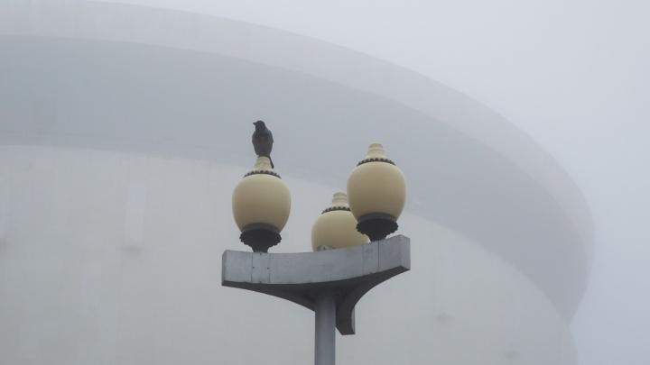 Привет из степей Казахстана: климатолог рассказал о причинах пылевой бури в Волгограде