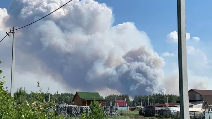 Под Тюменью вновь загорелся лес. Огонь подходил к населенному пункту