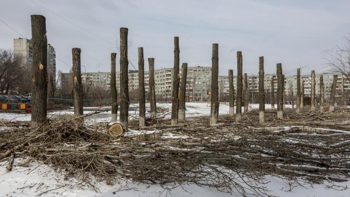 «Кому-то ведь это надо?»: волгоградец— оварварской обрезке деревьев на улицах города
