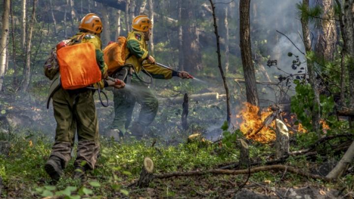 В Геленджике загорелся лес