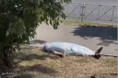 Очевидцы утверждают, что тело лежало под солнцем несколько часов