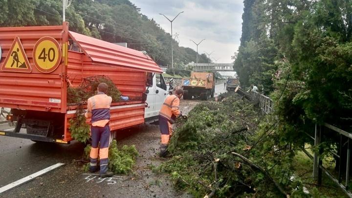 В Сочи упавшее дерево перекрыло путь в Адлер