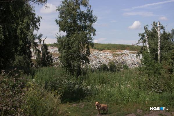 Гусинобродский мусорный полигон появился на окраине города почти 60 лет назад. Несмотря на постоянно растущую гору мусора, мерзкий запах и стаи кружащих птиц, совсем рядом со свалкой живут люди