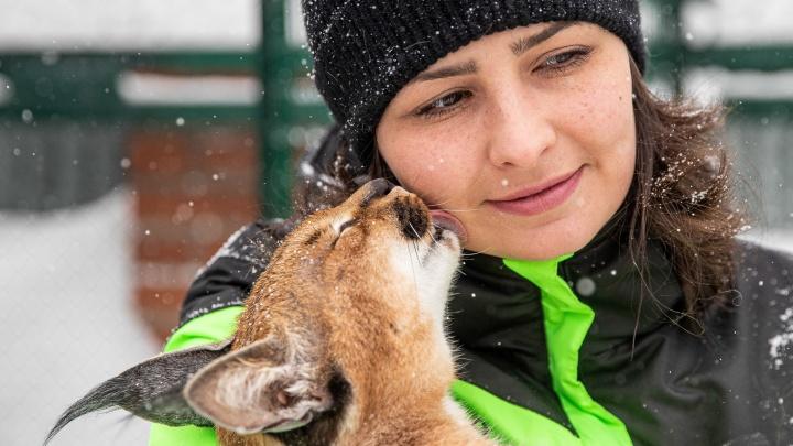 «Дома он съел всё». Ученая из Новосибирска завела опасных диких кошек и построила им вольер за миллион