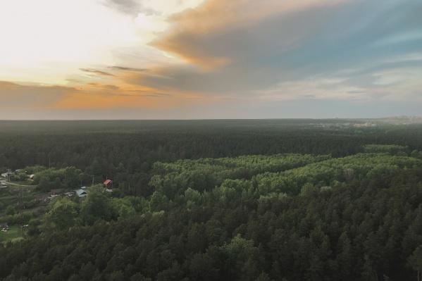 Наиболее крупный проект области — Заельцовский парк