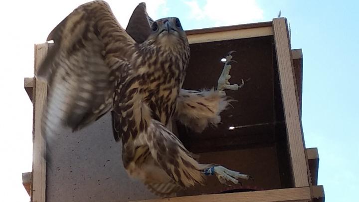 Группа НЛМК и фонд «Милосердие» поддержали проект центра реабилитации хищных птиц «Холзан»