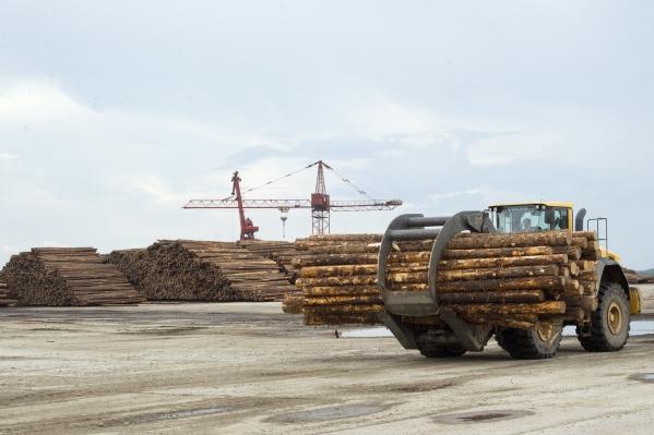 Лесной сектор края терпит вынужденные убытки