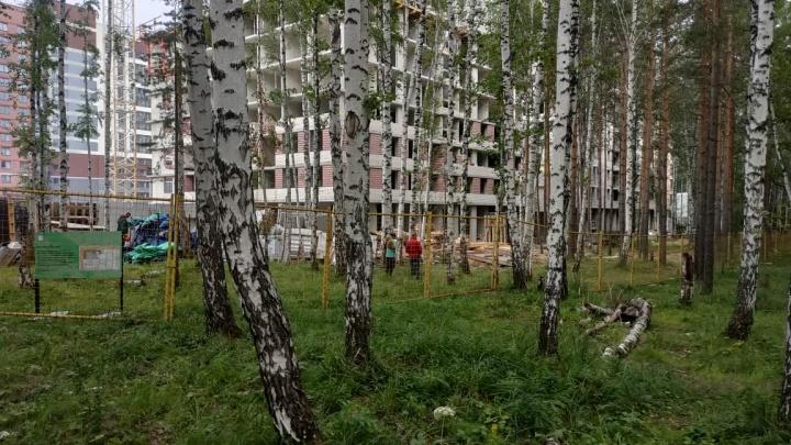 Защитники Берёзовой рощи заявили о подготовке к вырубке деревьев. Рассказываем позицию застройщика
