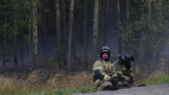 Прокуратура организовала проверку из-за лесного пожара под Первоуральском