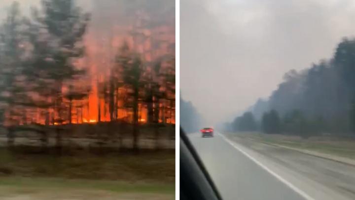 Огонь подобрался к поселку: под Асбестом бушует лесной пожар. Видео